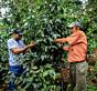 Kava s poreklom Honduras Capucas, obisk kooperative iz pražarne Escobar