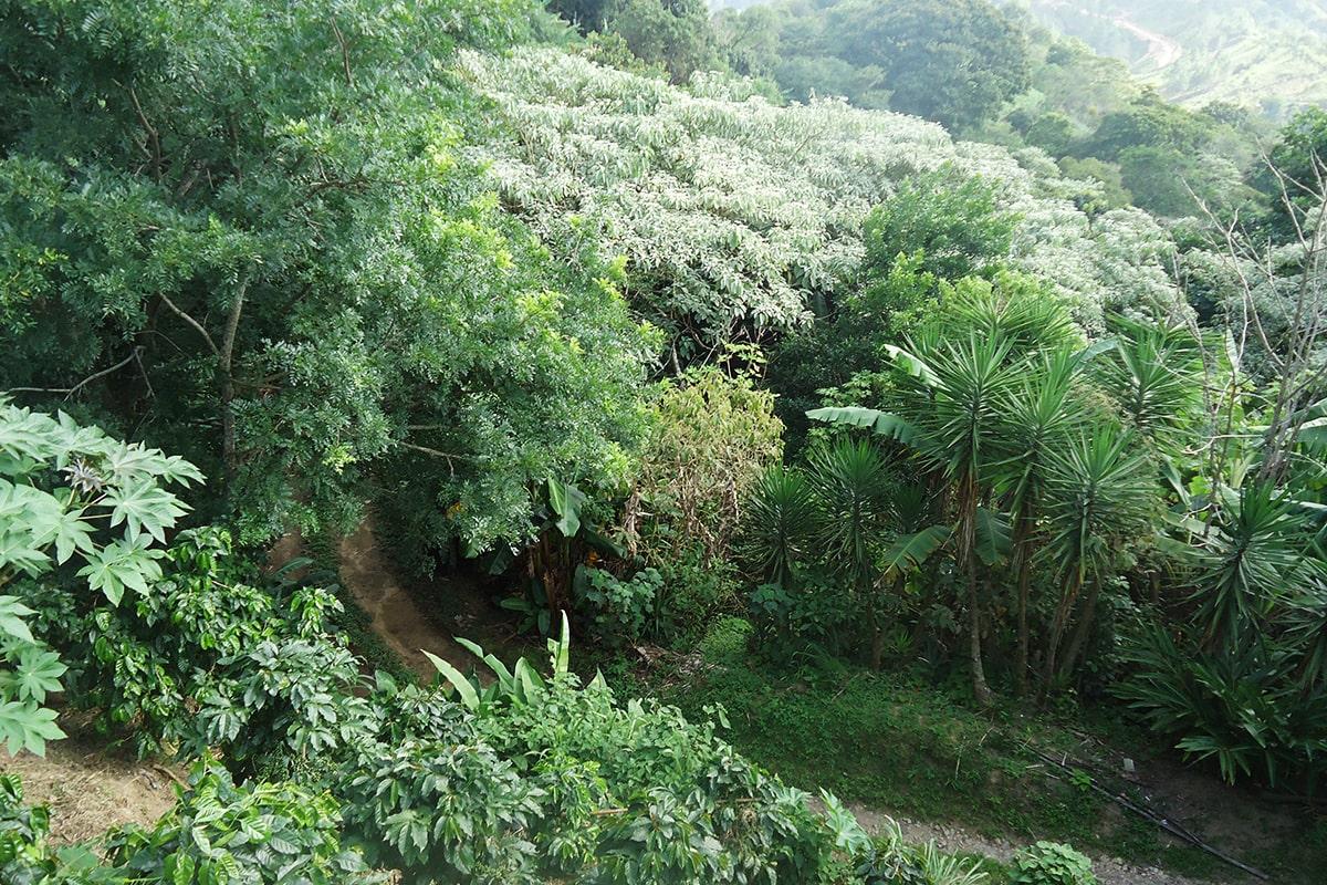 Nikaragva SAN JUAN DEL RIO COCO